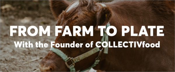 From farm to plate header image with cow