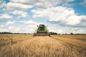 Picture of wheat and harvester